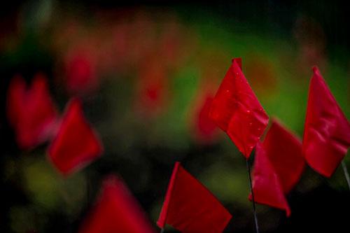 bandierine rosse